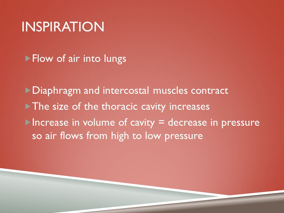 Inspiration Flow of air into lungs