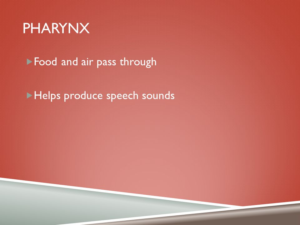 pharynx Food and air pass through Helps produce speech sounds