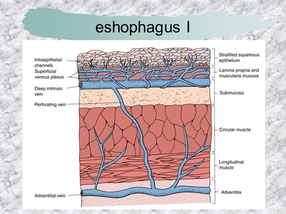 eshophagus I