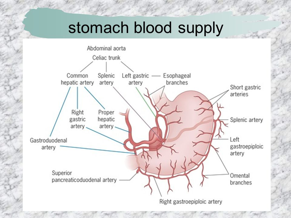 stomach blood supply
