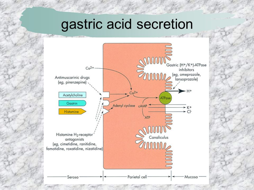 gastric acid secretion