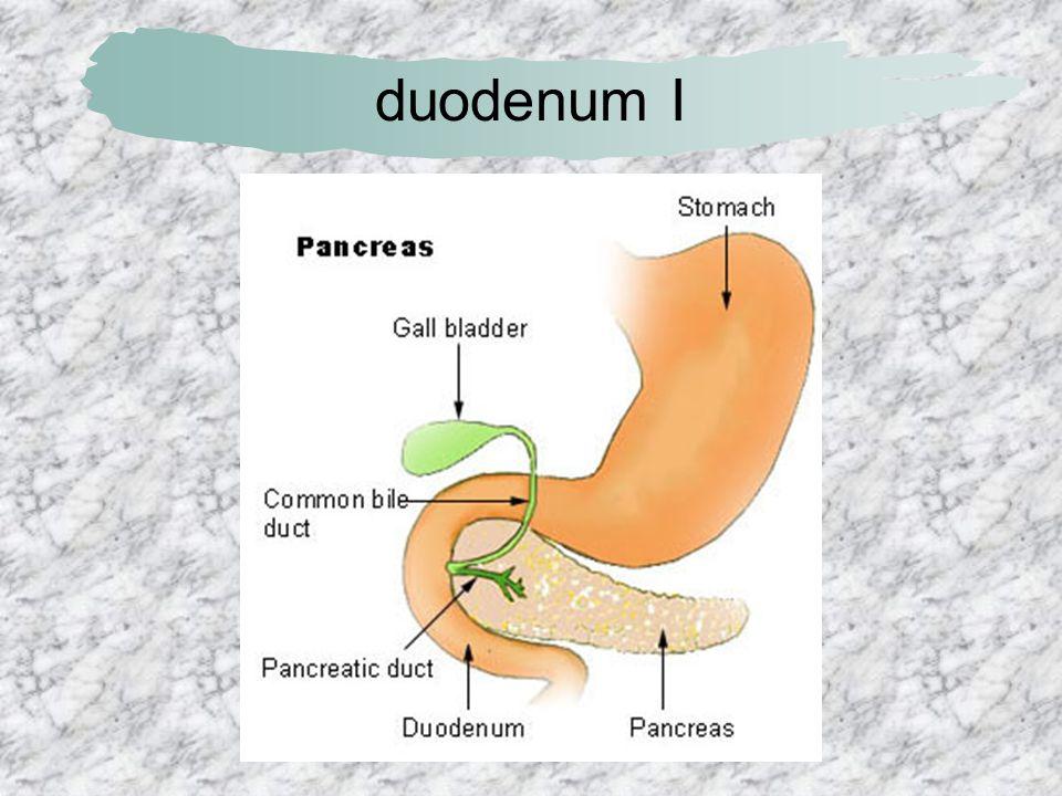 duodenum I