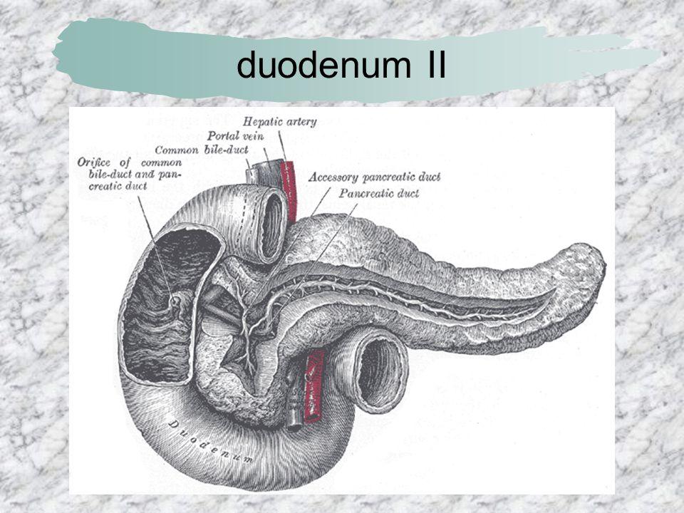 duodenum II
