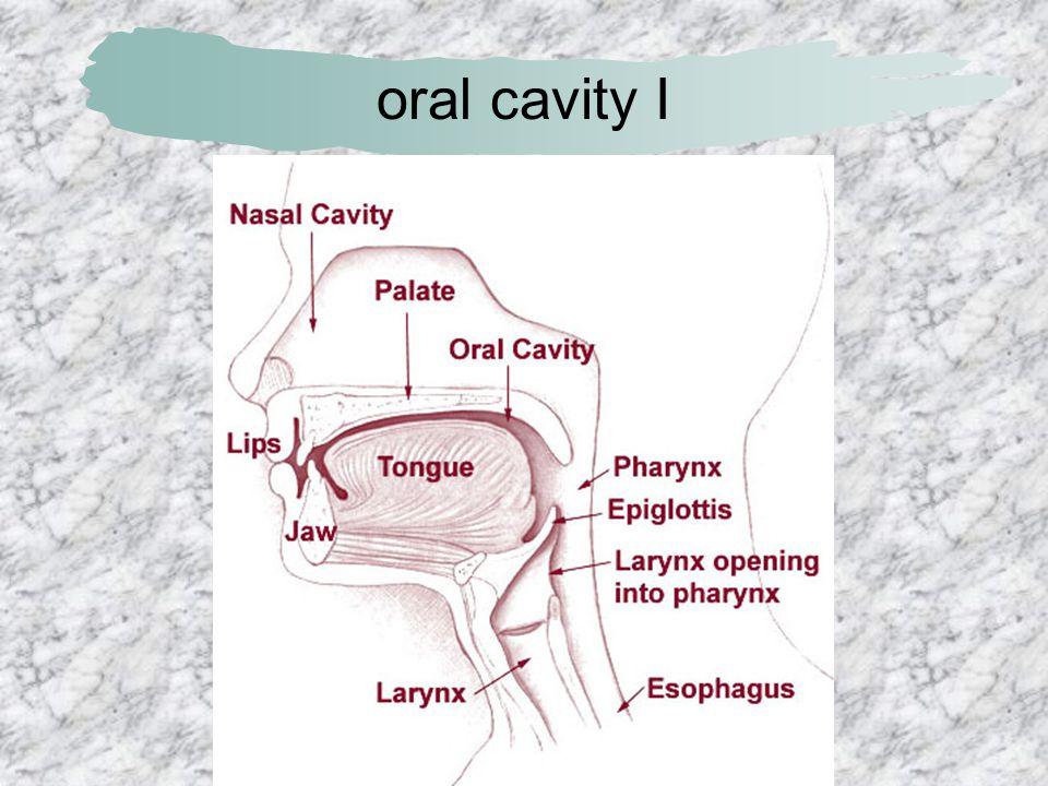 oral cavity I