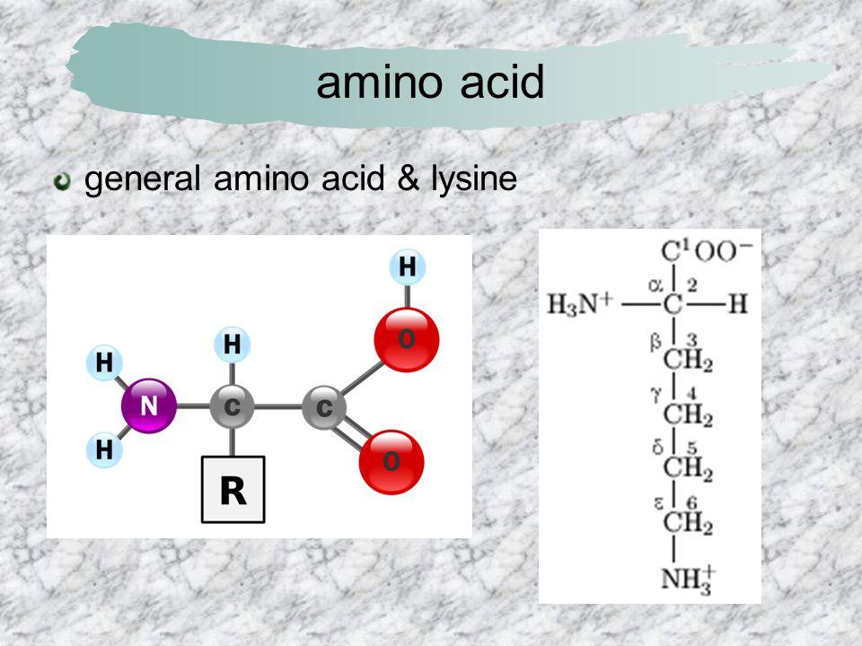 amino acid general amino acid & lysine