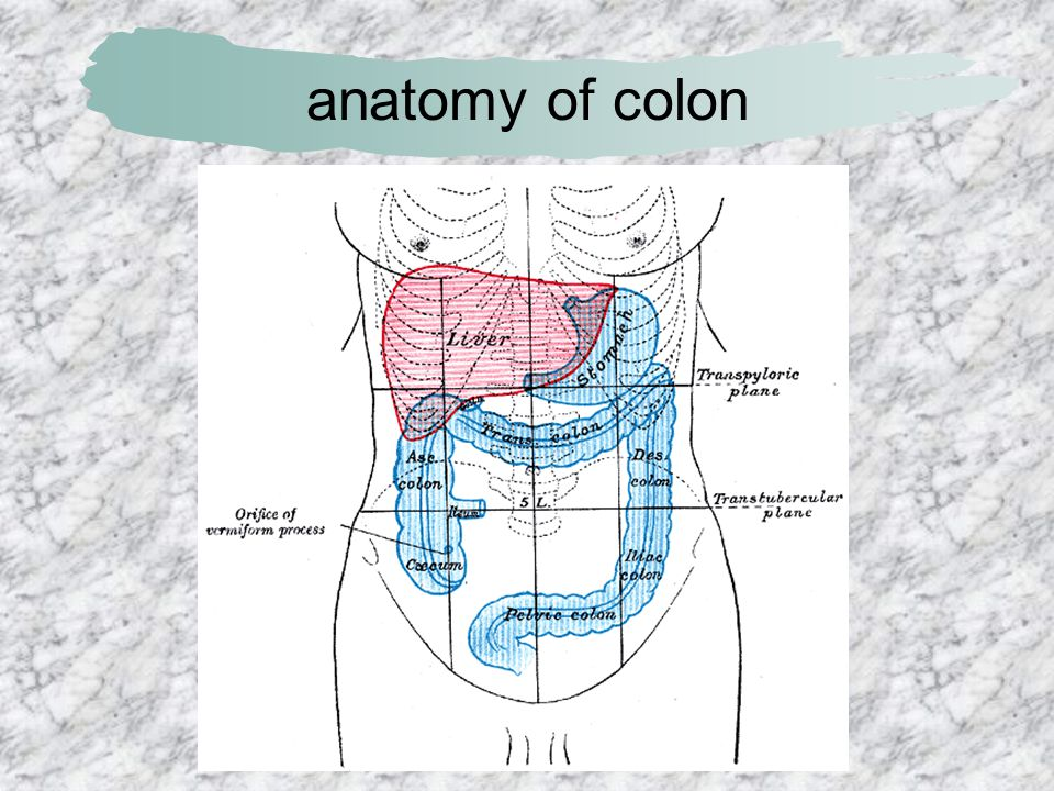 anatomy of colon