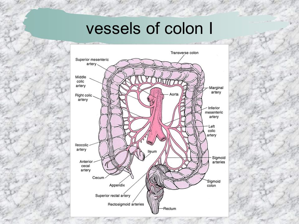 vessels of colon I