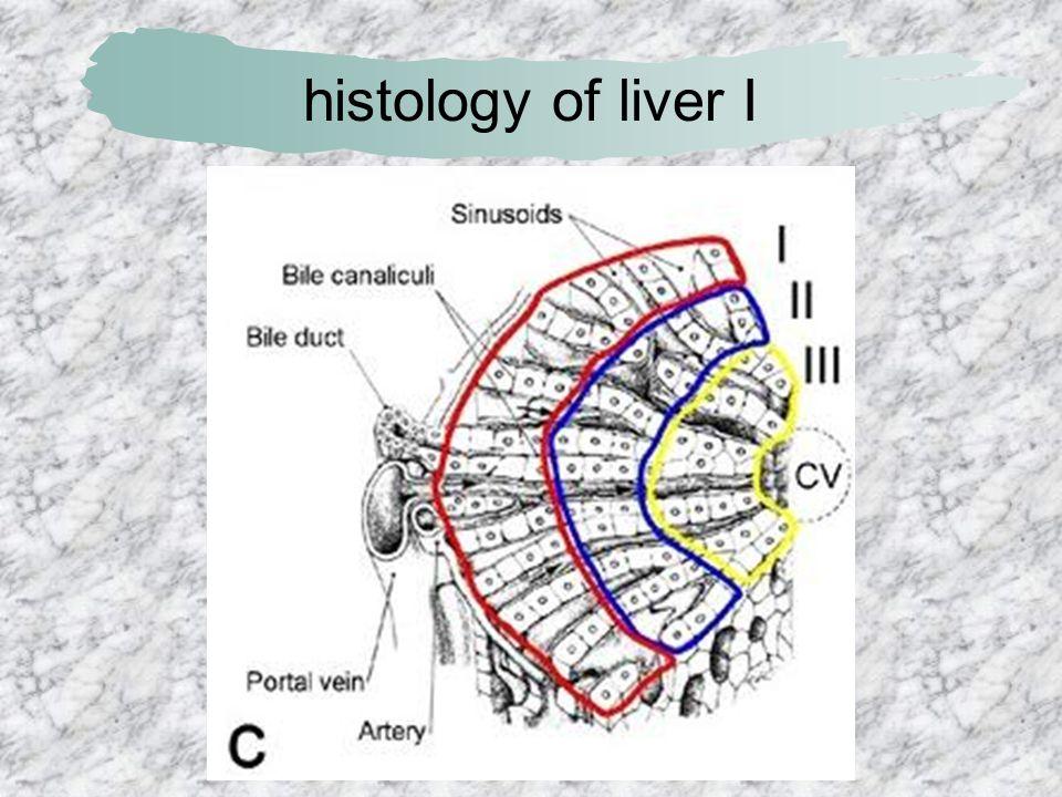 histology of liver I