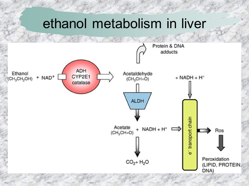 ethanol metabolism in liver