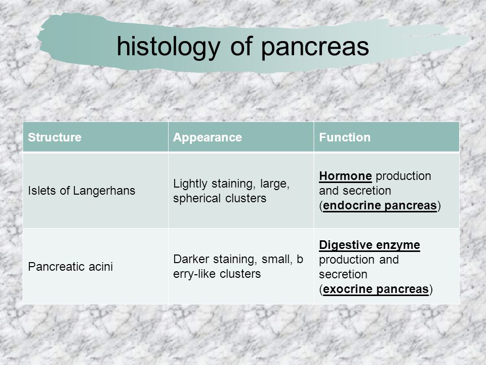 histology of pancreas Structure Appearance Function