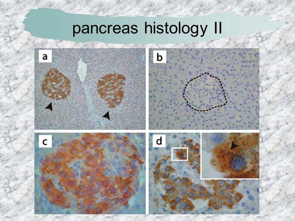 pancreas histology II