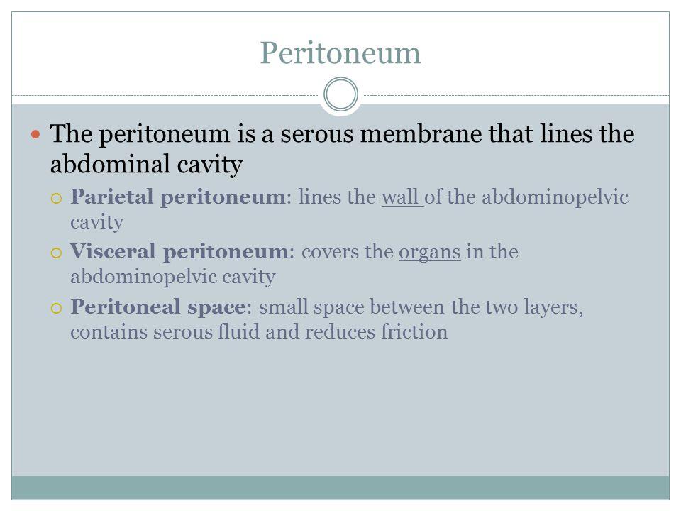 Peritoneum The peritoneum is a serous membrane that lines the abdominal cavity. Parietal peritoneum: lines the wall of the abdominopelvic cavity.