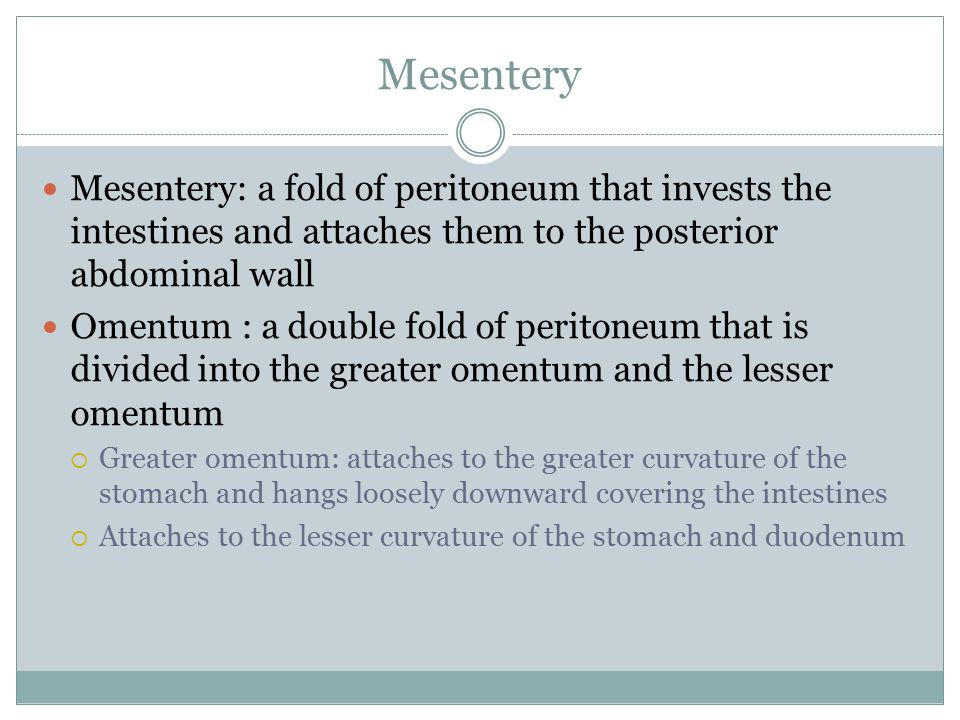 Mesentery Mesentery: a fold of peritoneum that invests the intestines and attaches them to the posterior abdominal wall.