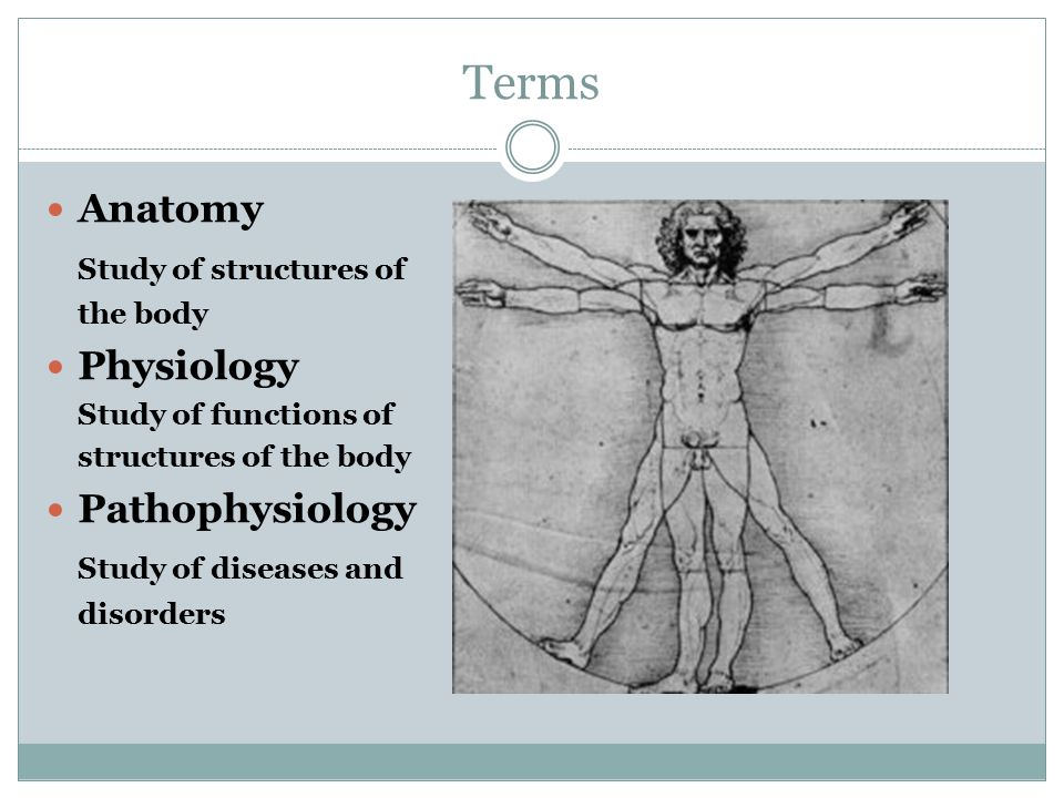 Terms Anatomy Study of structures of Physiology Pathophysiology