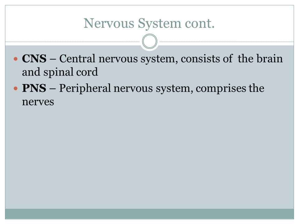Nervous System cont. CNS – Central nervous system, consists of the brain and spinal cord.