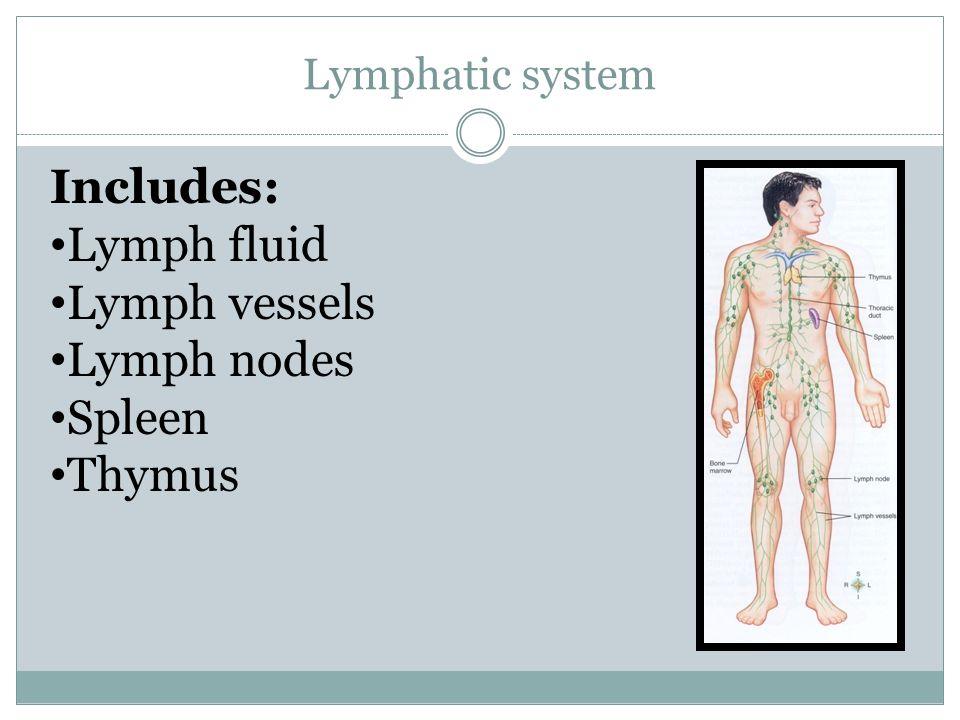 Includes: Lymph fluid Lymph vessels Lymph nodes Spleen Thymus