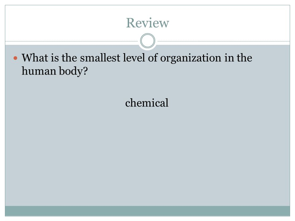 Review What is the smallest level of organization in the human body