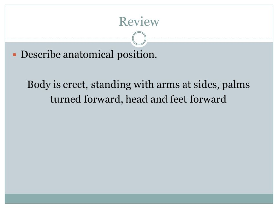 Review Describe anatomical position.