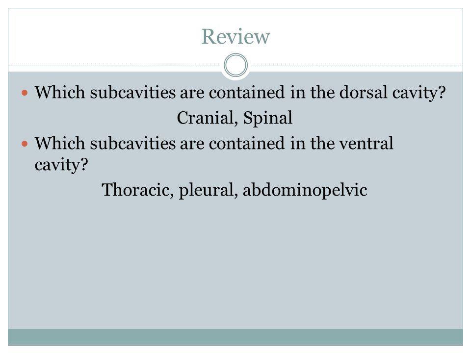 Thoracic, pleural, abdominopelvic