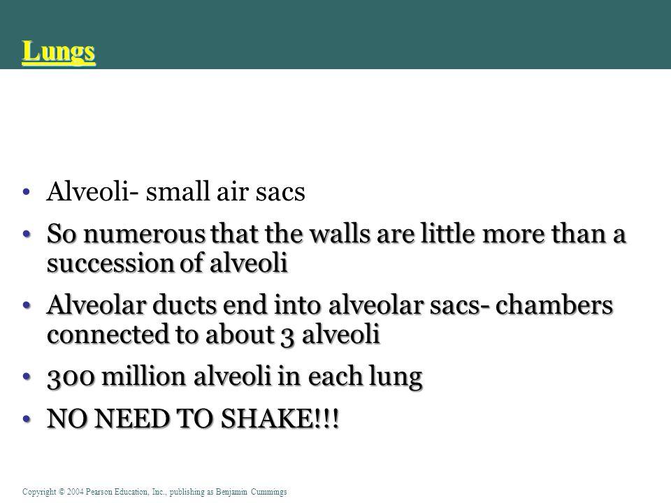 Lungs Alveoli- small air sacs