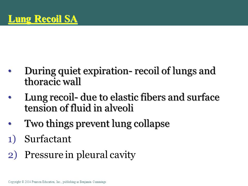 Lung Recoil SA During quiet expiration- recoil of lungs and thoracic wall.
