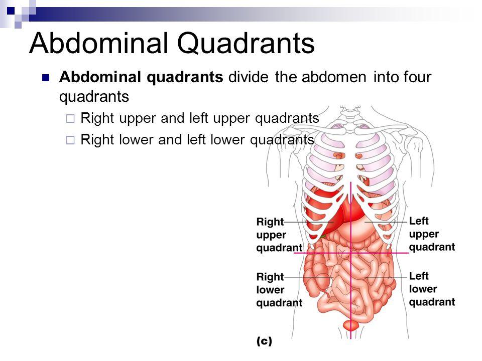 Abdominal Quadrants Abdominal quadrants divide the abdomen into four quadrants. Right upper and left upper quadrants.