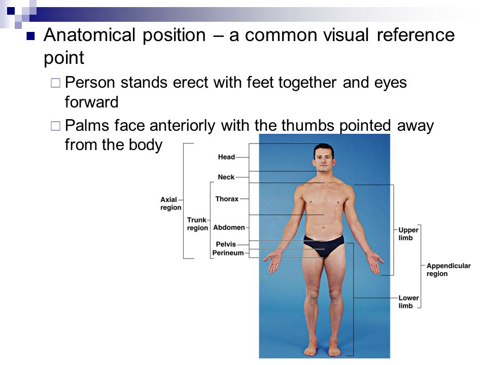 Anatomical position – a common visual reference point