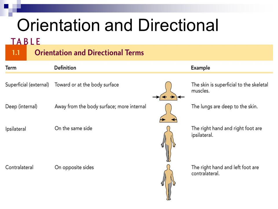 Orientation and Directional Terms