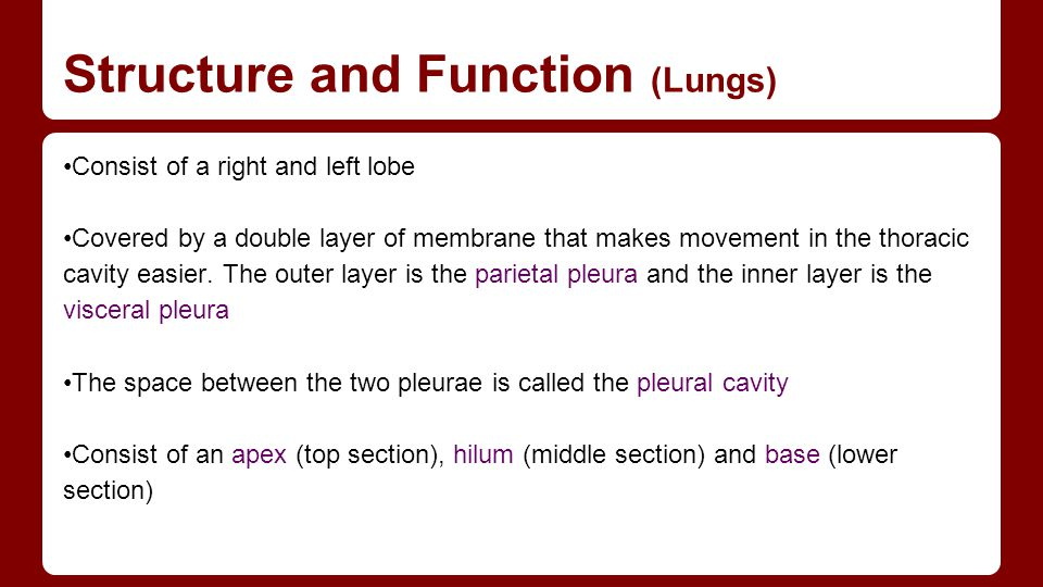 Structure and Function (Lungs)