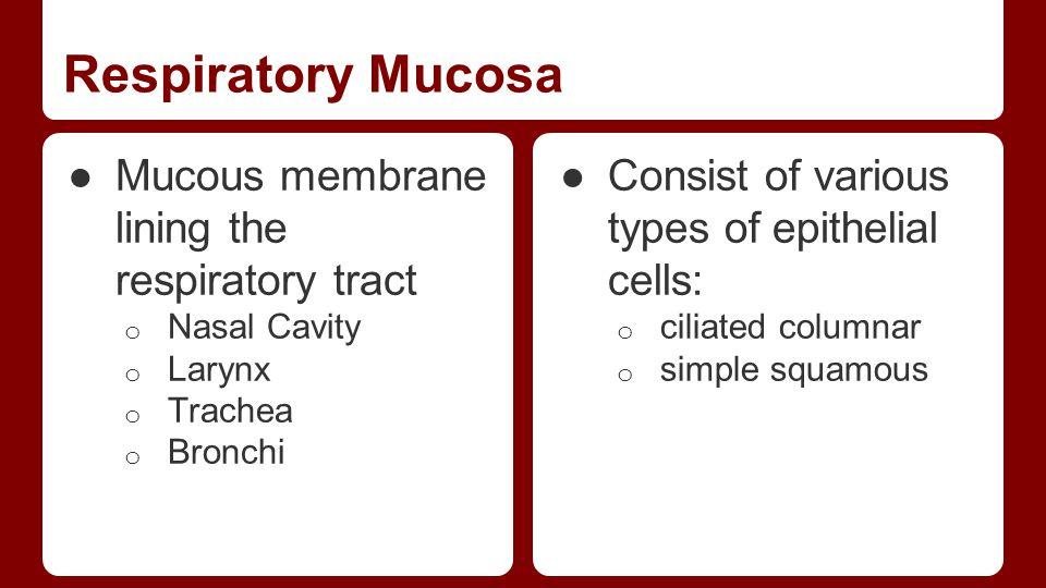 Respiratory Mucosa Mucous membrane lining the respiratory tract