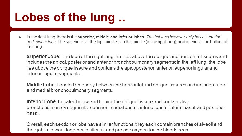 Lobes of the lung ..