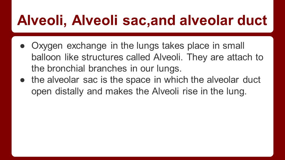 Alveoli, Alveoli sac,and alveolar duct