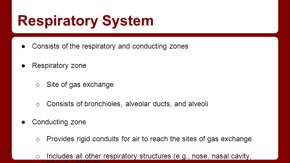 Respiratory System Consists of the respiratory and conducting zones