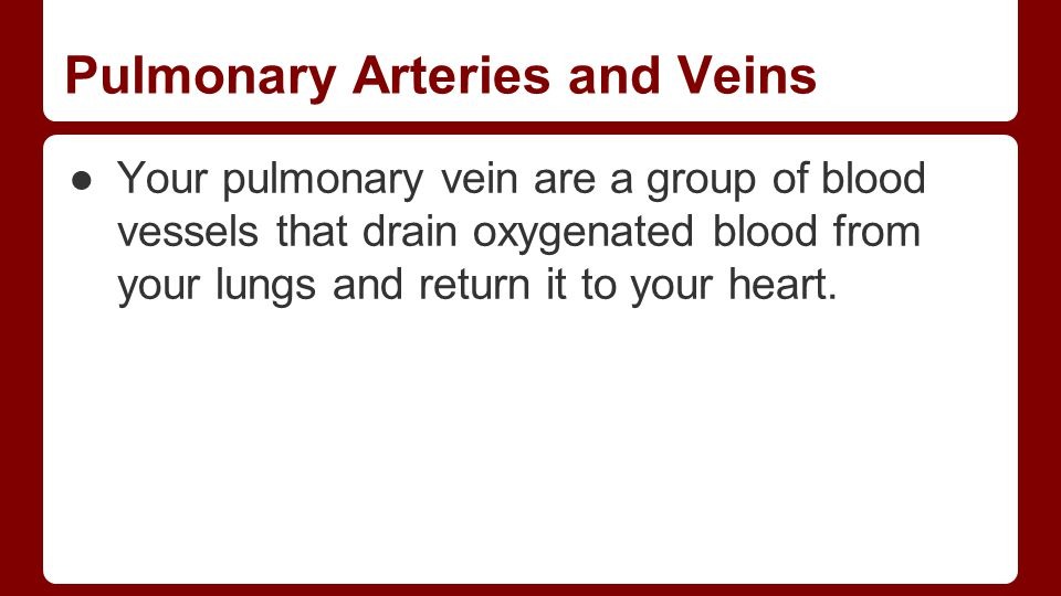 Pulmonary Arteries and Veins