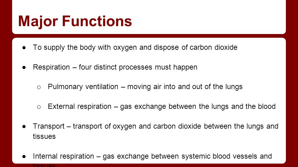 Major Functions To supply the body with oxygen and dispose of carbon dioxide. Respiration – four distinct processes must happen.