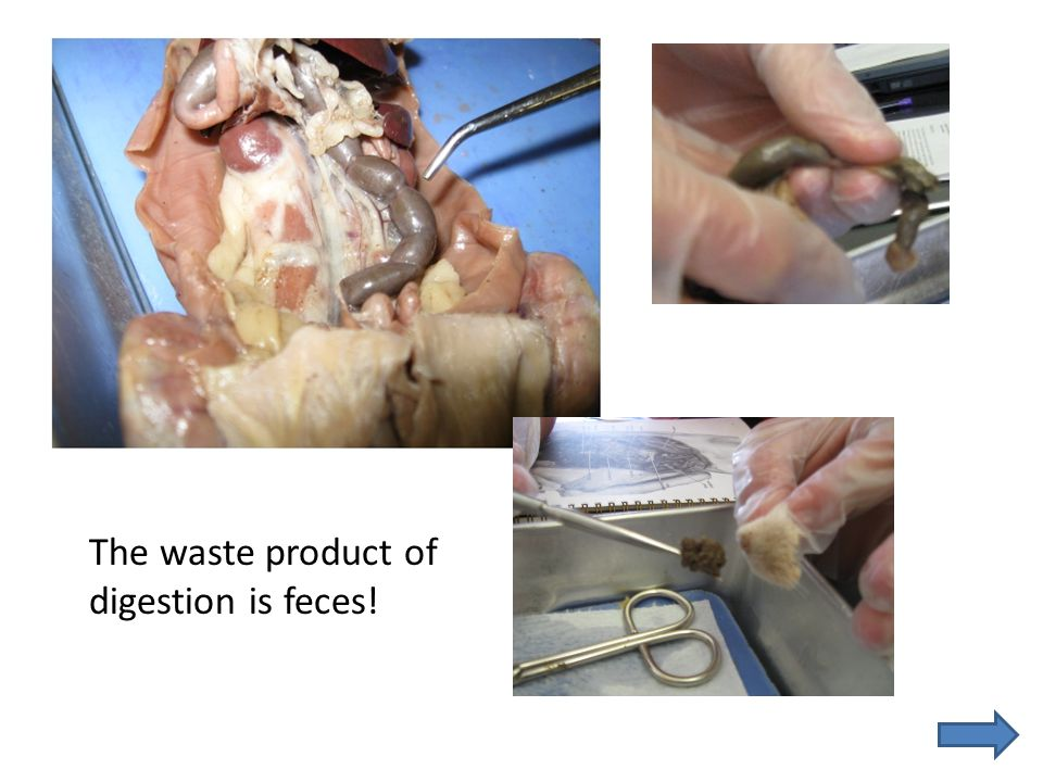 The waste product of digestion is feces!