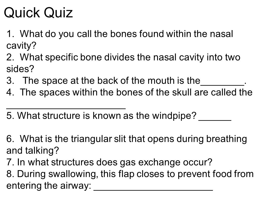 Quick Quiz 1. What do you call the bones found within the nasal cavity 2. What specific bone divides the nasal cavity into two sides
