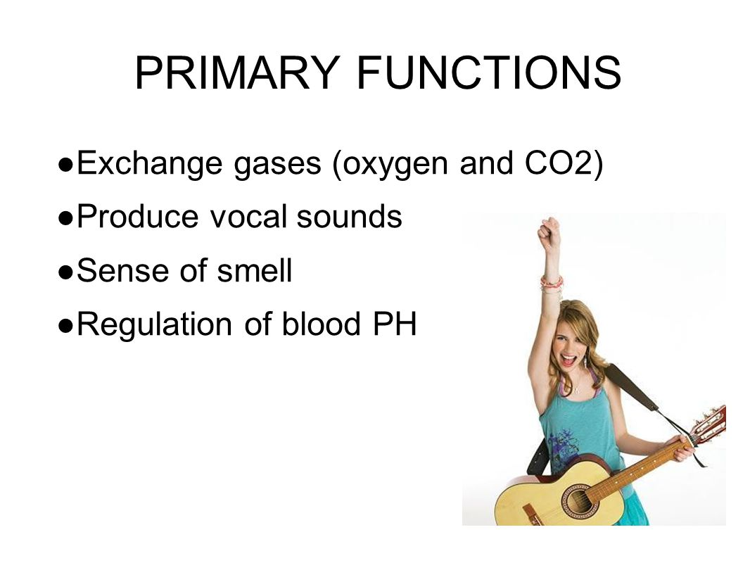 PRIMARY FUNCTIONS Exchange gases (oxygen and CO2) Produce vocal sounds
