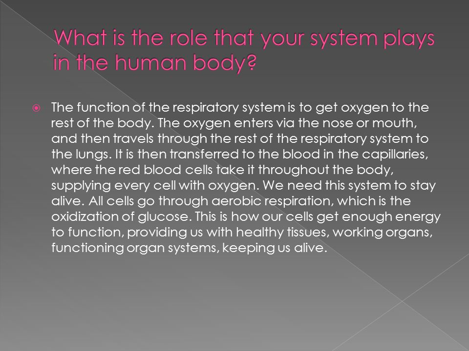 What is the role that your system plays in the human body