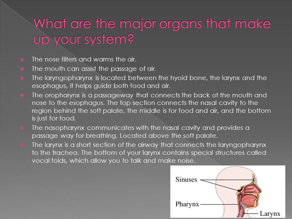 What are the major organs that make up your system