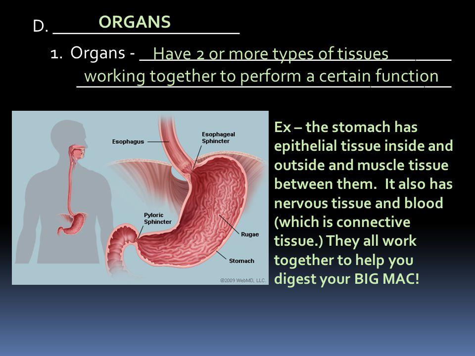 ORGANS D. _____________________ 1. Organs - ___________________________________ __________________________________________