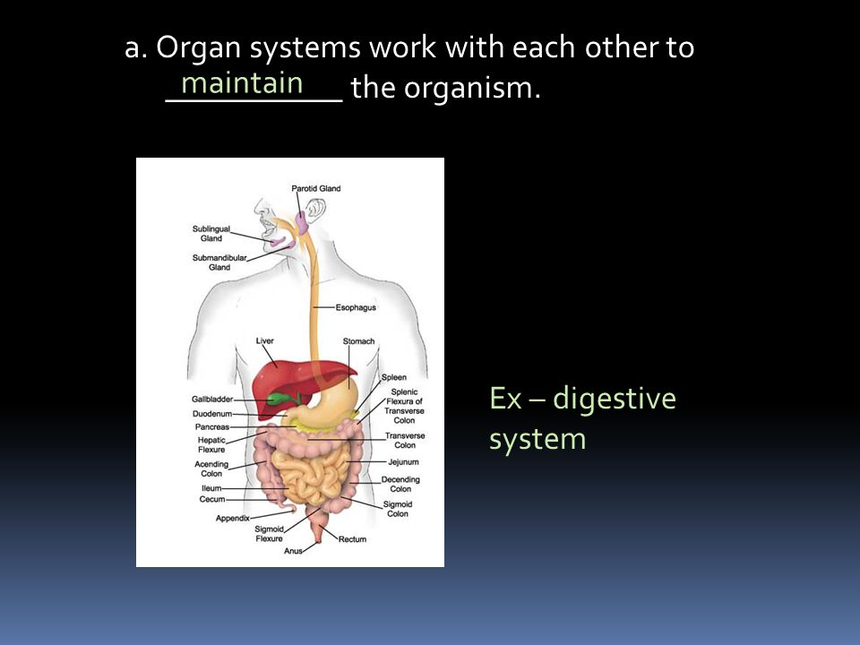 a. Organ systems work with each other to ___________ the organism.