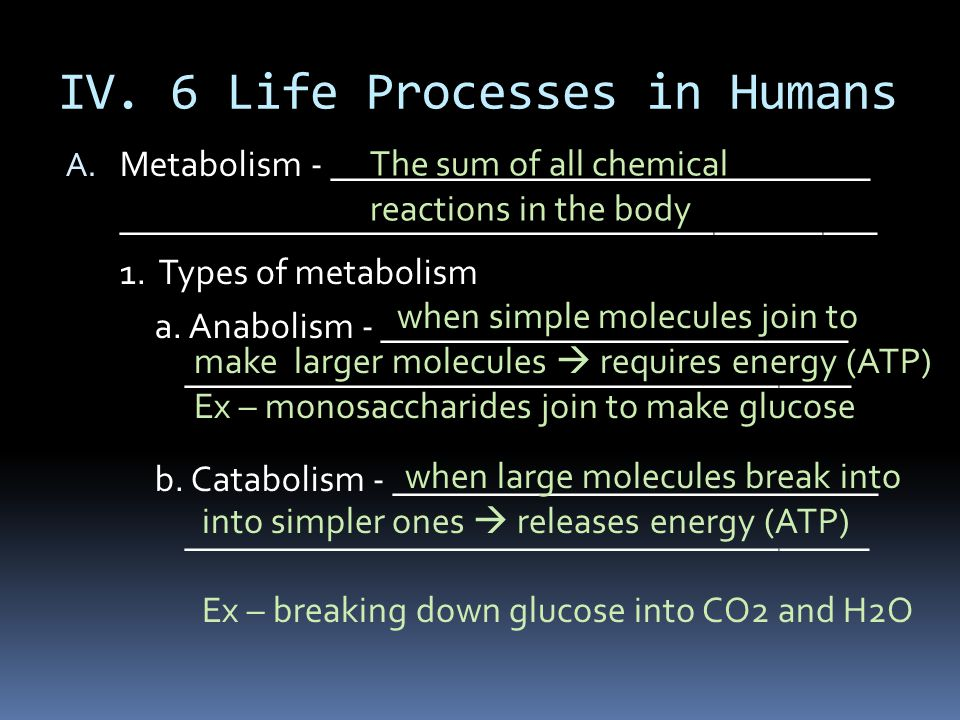 IV. 6 Life Processes in Humans