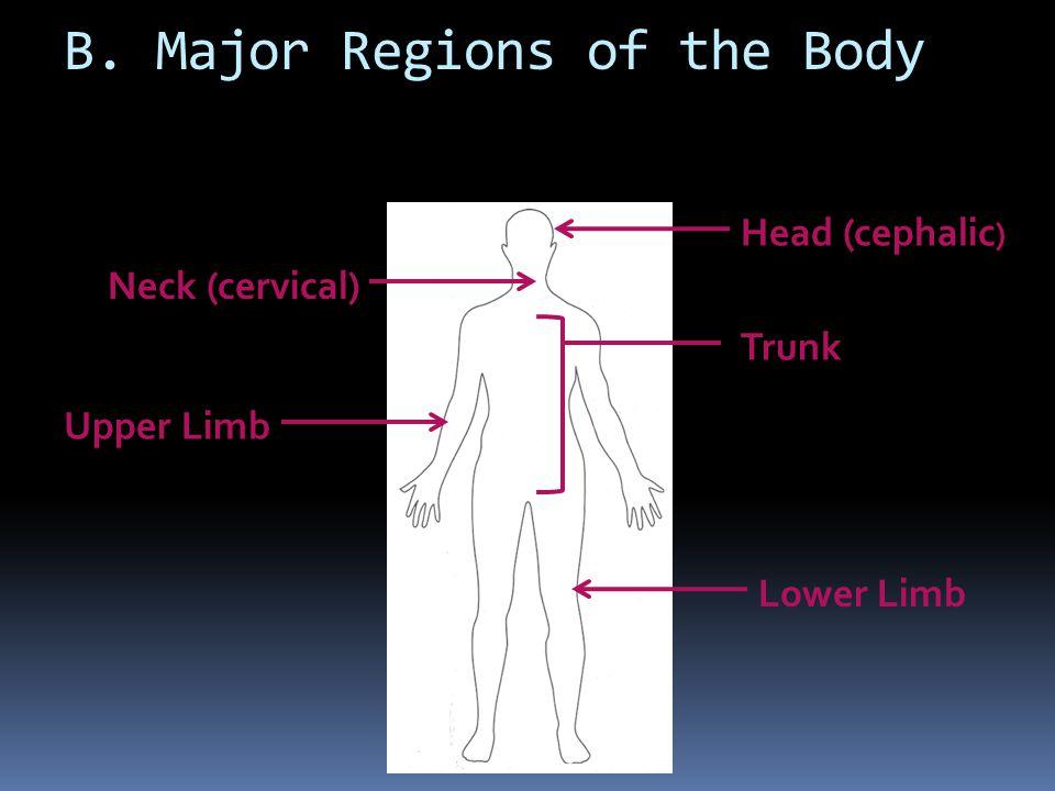 B. Major Regions of the Body