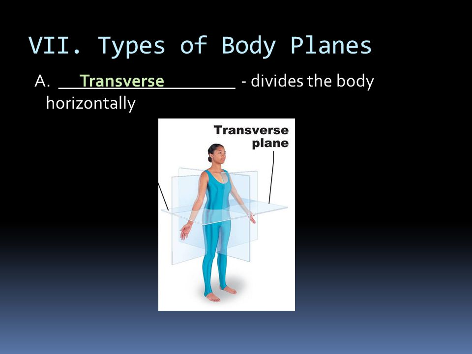VII. Types of Body Planes
