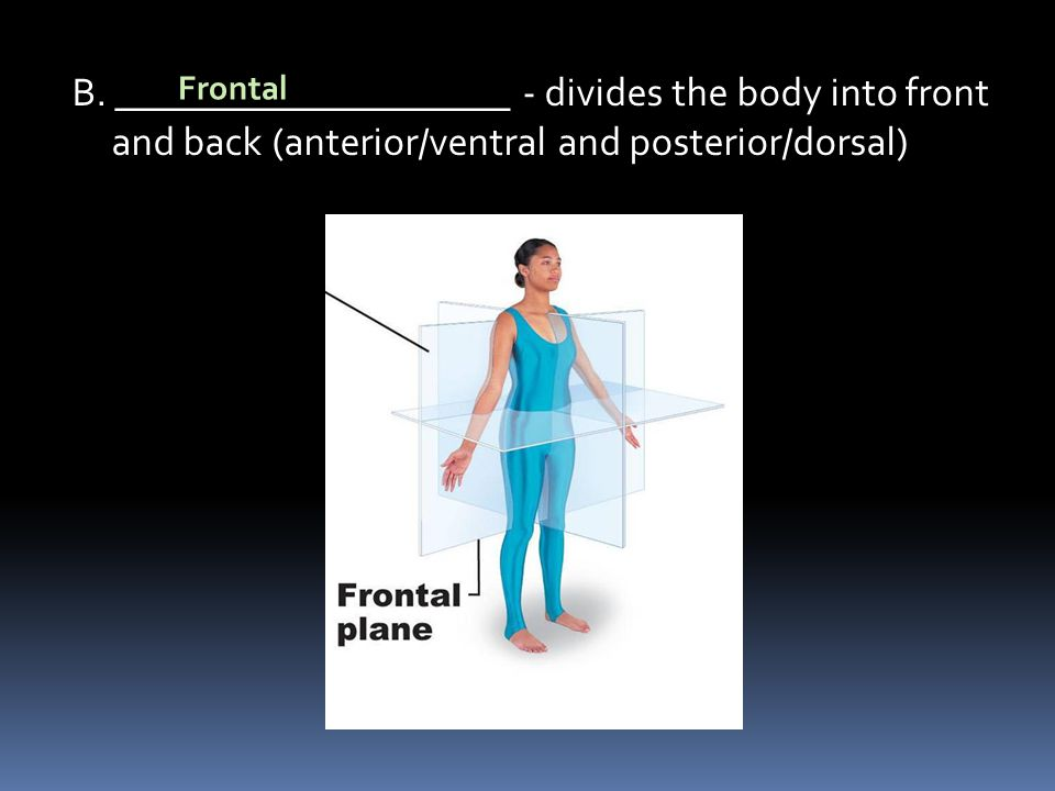 B. ____________________ - divides the body into front and back (anterior/ventral and posterior/dorsal)