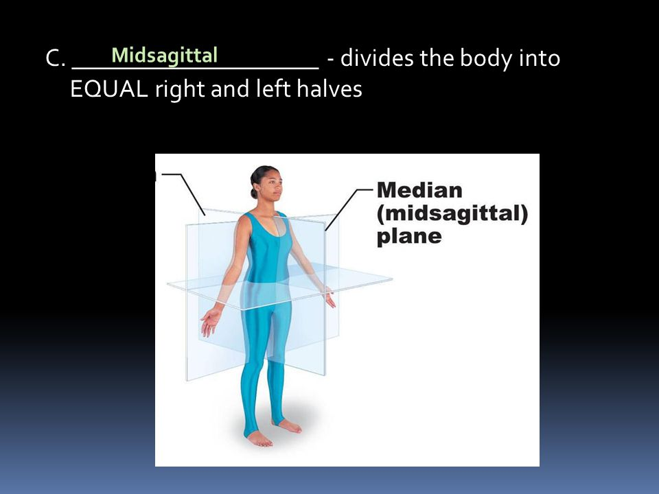 C. ____________________ - divides the body into EQUAL right and left halves