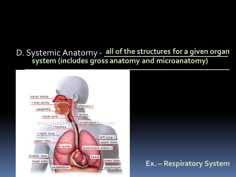 D. Systemic Anatomy - ____________________________ ______________________________________________