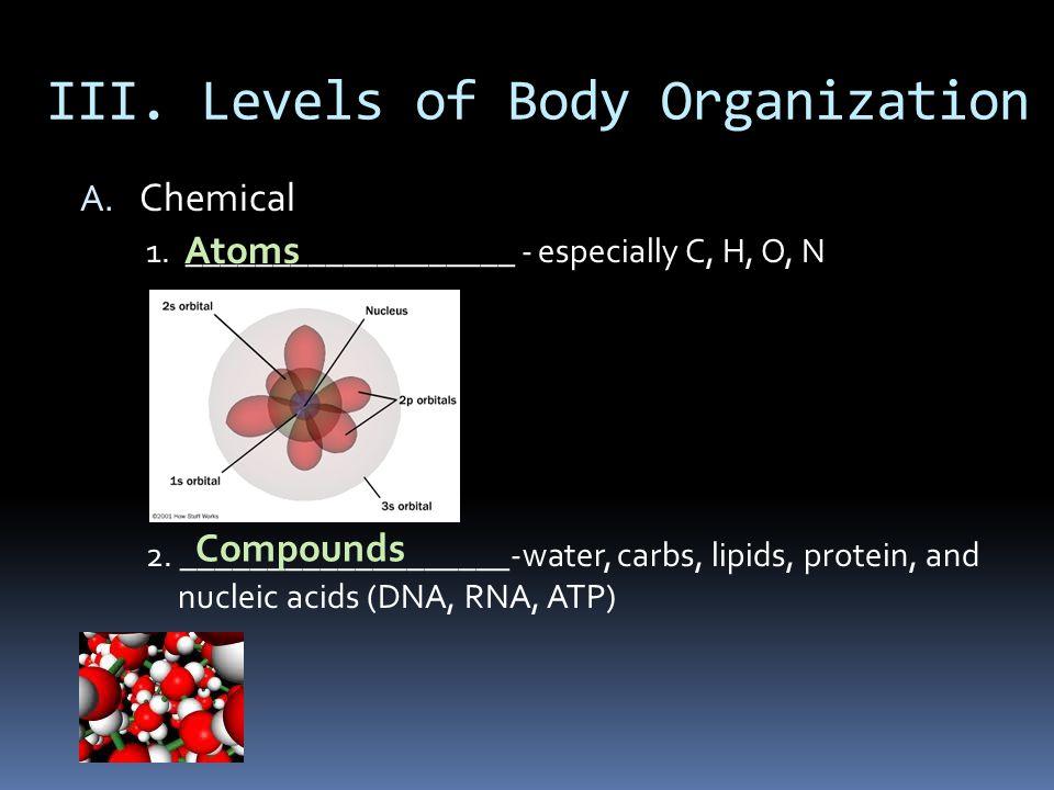 III. Levels of Body Organization