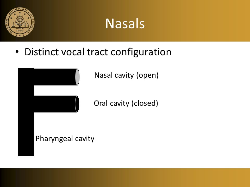 Nasals Distinct vocal tract configuration Nasal cavity (open)